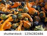 Decorative Squash Gourds Season....