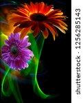 gerbera orange and gerbera... | Shutterstock . vector #1256285143