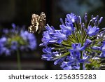 Frame Of A Butterfly Resting O...