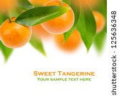 Tree Of Sweet Tangerine With...