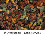 colorful autumn leaves | Shutterstock . vector #1256429263