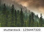 the forest after the storm | Shutterstock . vector #1256447320