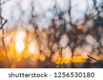 soft focus sunlight through... | Shutterstock . vector #1256530180