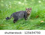 Cat  Staying In A Tall Grass