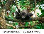 Interested Male Yucatan Spider...