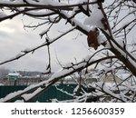 | Shutterstock . vector #1256600359