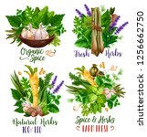 spices and herbs  organic... | Shutterstock .eps vector #1256662750