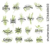 herbs and spices vector... | Shutterstock .eps vector #1256668603