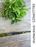 fresh herbs on wooden surface | Shutterstock . vector #1256677783
