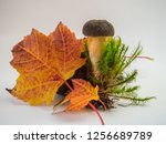 Autumn Template With Mushroom
