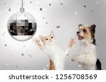 Happy Dog And Cat Dancing At...
