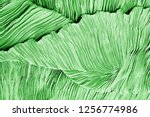 texture  background  pattern ... | Shutterstock . vector #1256774986