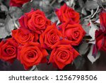 close up on red roses | Shutterstock . vector #1256798506