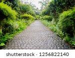 cobble stone walkway in a...   Shutterstock . vector #1256822140