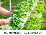 close up hand farmer in... | Shutterstock . vector #1256846599