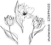 vector tulip black and white... | Shutterstock .eps vector #1256994103