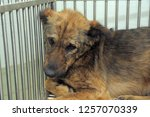poor dog in a cage | Shutterstock . vector #1257070339