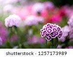 flowers in nature. | Shutterstock . vector #1257173989