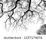 realistic oak tree silhouette ...   Shutterstock . vector #1257174076