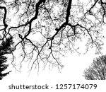 realistic oak tree silhouette ...   Shutterstock . vector #1257174079