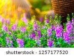 flowers in nature. | Shutterstock . vector #1257177520