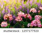flowers in nature. | Shutterstock . vector #1257177523