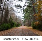 a leaf covered path trails off... | Shutterstock . vector #1257203413