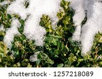 winter new year  n the snow ... | Shutterstock . vector #1257218089