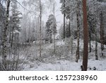 snowy forest woods   cold and... | Shutterstock . vector #1257238960