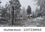 snowy forest woods   cold and... | Shutterstock . vector #1257238963