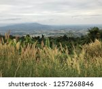 flowers grass on the mountain | Shutterstock . vector #1257268846