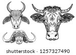 a set of colorings. zebu cow ... | Shutterstock .eps vector #1257327490