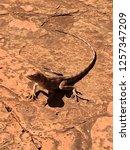 red mimetic lizard | Shutterstock . vector #1257347209