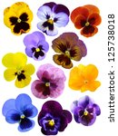 Violet  Flower Collection