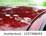 bird shit  drop of bird stain... | Shutterstock . vector #1257388693