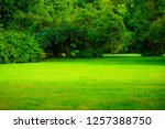 green grass lawn  meadow in... | Shutterstock . vector #1257388750