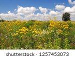 Prairie Flowers At Horicon Marsh