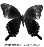 blue butterfly isolated black and white - stock photo