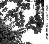fresh green leaves black and white - stock photo