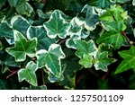 Macro Of Beautiful  Lush Green...