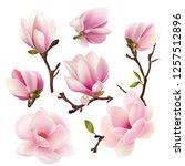 magnolia. beautiful. gentle.... | Shutterstock .eps vector #1257512896