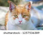 street cat sitting | Shutterstock . vector #1257536389