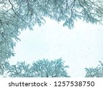 Snowfall. Trees In The Snow....