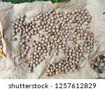 natural walnut background...   Shutterstock . vector #1257612829