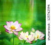 Beautiful Lotus With Nice...