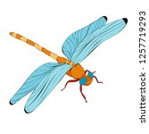 bright flying dragonfly | Shutterstock .eps vector #1257719293