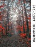 autumn forest | Shutterstock . vector #125774369