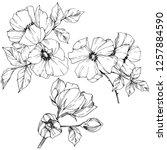 vector rosa canina. floral... | Shutterstock .eps vector #1257884590