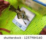 scientific exhibition ...   Shutterstock . vector #1257984160