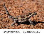 thorny devil australia | Shutterstock . vector #1258080169